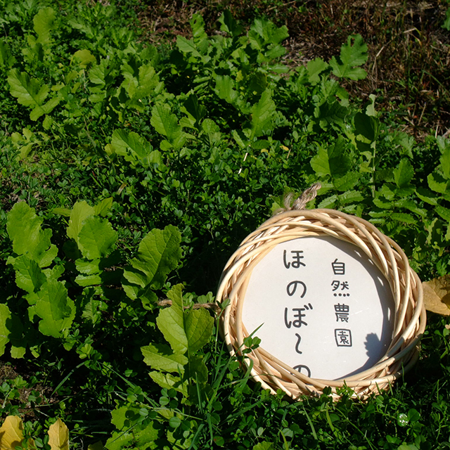 自然農園ほのぼ〜の(自然栽培の野菜)
